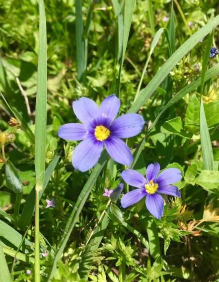 violet unknown